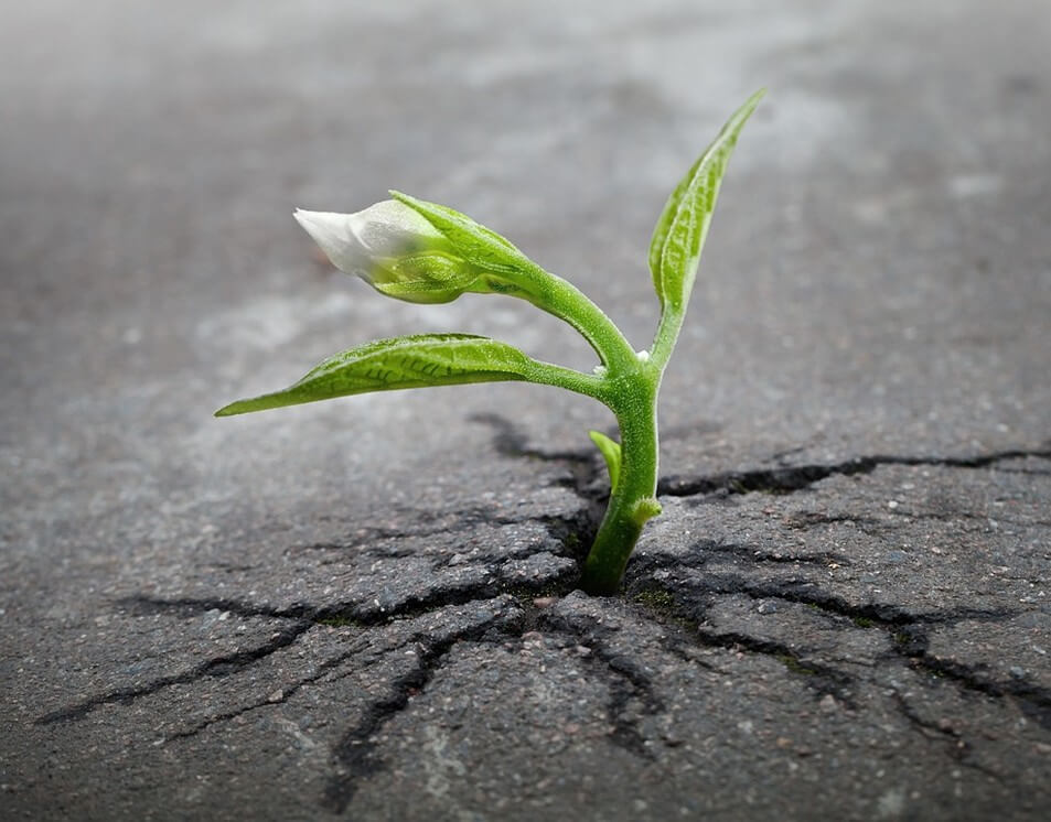 Small Plant Growing through Concrete
