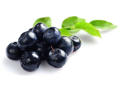 Bilberry on white background with leafs benefits in Herbal
