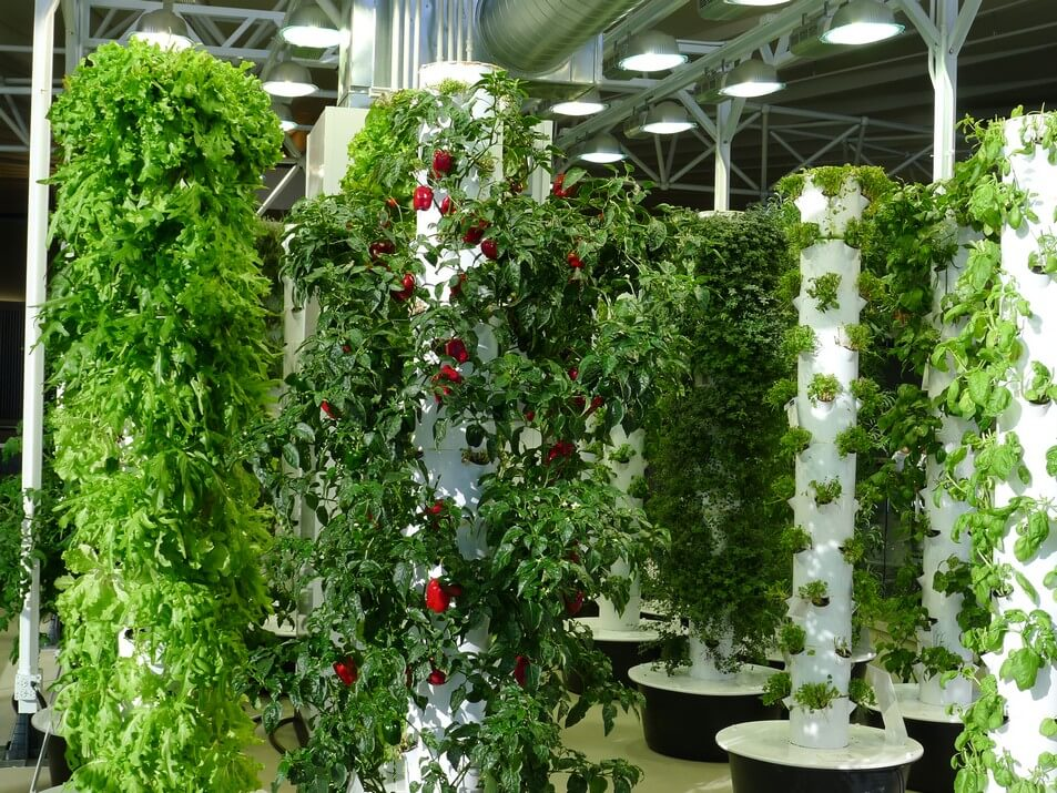 Vertical Greenhouse indoors